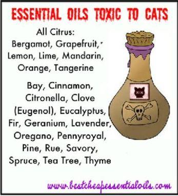 32ac2582eb8dc345dedeffc185591d8f--cat-health-healing-oils